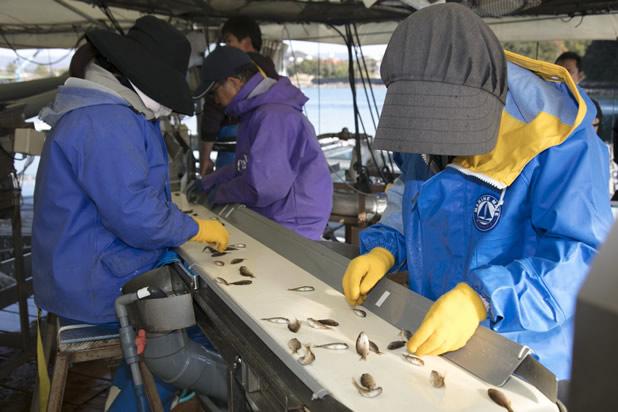 養殖稚魚選別をAIで効率化する技術